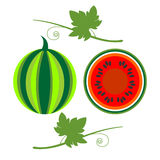 Vector fruits illustration. Detailed icons of watermelon with leaves, whole and half, isolated over white background Stock Images