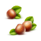 Vector Full Unpeeled Realistic Hazelnuts with Leaves Close up Isolated Royalty Free Stock Photos