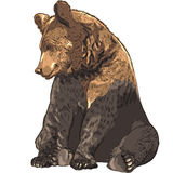 Vector funny bear sitting Royalty Free Stock Image