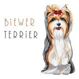 Vector funny Biewer Yorkshire Terrier dog sitting. Cute funny dog Biewer Yorkshire Terrier breed sitting vector Stock Photo