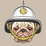 Vector funny cartoon dog pug in the British helmet. Serious dog breed pug in the British helmet Royalty Free Stock Image
