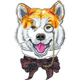 Vector funny cartoon hipster dog Akita Inu. Hipster dog Akita Inu breed in a glasses and bow tie royalty free illustration
