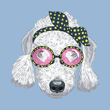Vector funny cartoon hipster dog Bedlington Terrier Stock Image