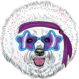 Vector funny cartoon hipster dog Bichon Star Disco Stock Image
