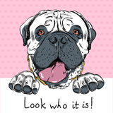 Vector funny cartoon hipster dog Bullmastiff Stock Photos