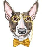 Vector funny cartoon hipster dog Bullterrier. Hipster dog Bullterrier breed in a gold pince-nez and bow tie