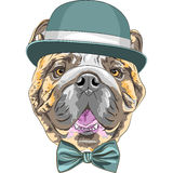 Vector funny cartoon hipster dog English Bulldog breed Royalty Free Stock Photos