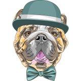 Vector funny cartoon hipster dog English Bulldog breed vector illustration
