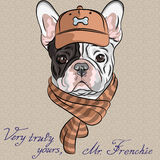 Vector funny cartoon hipster dog French Bulldog b royalty free illustration