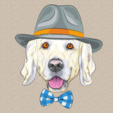 Vector funny cartoon hipster dog Golden Retriever Royalty Free Stock Images