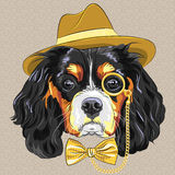 Vector funny cartoon hipster dog King Charles Span Royalty Free Stock Image