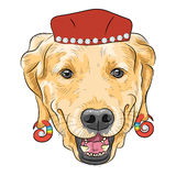 Vector funny cartoon hipster dog Labrador Retriever. Hipster dog Labrador Retriever breed in a red hat with earrings spiral Stock Photography
