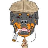 Vector funny cartoon hipster dog Rottweiler stock illustration
