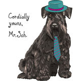 Vector funny cartoon hipster dog Schnauzer Stock Photo