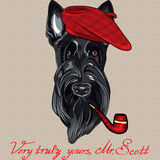 Vector funny cartoon hipster dog Scottish Terrier. Hipster dog Scottish Terrier breed in red beret with a pipe royalty free illustration