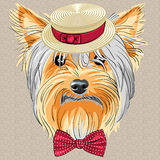 Vector funny cartoon hipster dog Yorkshire Terrier. Hipster dog Yorkshire Terrier breed in a Straw boater and bow tie Royalty Free Stock Image