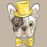 Vector funny cartoon hipster French Bulldog dog