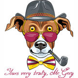 Vector funny cartoon hipster Greyhound Dog breed Royalty Free Stock Photos
