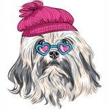 Vector funny cartoon hipster Lowchen dog stock illustration