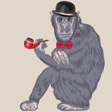 Vector funny cartoon hipster monkey Stock Photos
