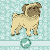Vector funny cartoon pug Stock Images