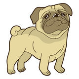 Vector funny cartoon pug Royalty Free Stock Photography