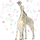 Vector Funny couple in love giraffes Royalty Free Stock Image