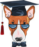 Vector funny graduated dog Bullterrier Royalty Free Stock Image