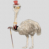 Vector funny Ostrich Bird hipster stock illustration