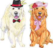 Vector funny pair of dogs labrador retriever wearing hats and ti. Hipster pair of dogs: white labrador gentleman in a hat and bow tie and red labrador lady in a Stock Images