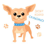 Vector funny shorthaired Chihuahua dog sitting Royalty Free Stock Image
