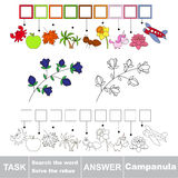 Vector game. Search the word. Find hidden word Campanula Royalty Free Stock Photo