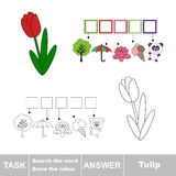 Vector game. Search the word. Find hidden word Tulip Royalty Free Stock Photo