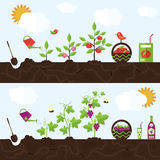 Vector garden illustration in flat style Royalty Free Stock Photo