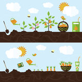Vector garden illustration in flat style. Royalty Free Stock Images