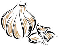Vector Garlic Stock Photography