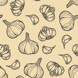 Garlic seamless pattern. Vector garlic seamless pattern for menu, posters. Isolated spice product. Hand drawn retro plant Stock Image