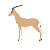 Vector gazelle Stock Photography
