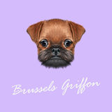 Vector Geïllustreerd portret van het puppy van Brussel Griffon stock afbeeldingen