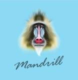 Vector Geïllustreerd portret van Mandrilaap vector illustratie
