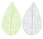 Vector geïsoleerd blad vector illustratie