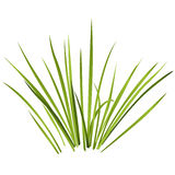 Vector geïsoleerd riet Waterplanten in verschillende varianten, witte achtergrond Royalty-vrije Stock Fotografie