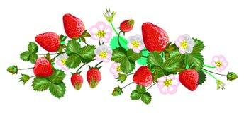 Vector geïsoleerde aardbeien Stock Foto