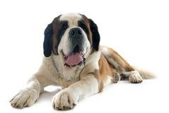 Vector geïsoleerde hond Stock Afbeelding