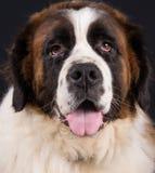 Vector geïsoleerde hond Stock Fotografie