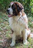 Vector geïsoleerde hond Royalty-vrije Stock Fotografie