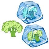 Vector gefrorenen Brokkoli im Eiswürfel auf weißem Hintergrund ENV 8 Lizenzfreie Stockfotos