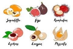 Vector gegraveerde stijl organische exotische vruchten inzameling voor affiches, decoratie, verpakking, menu, embleem royalty-vrije stock afbeelding