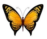 Vector gele vlinder Stock Afbeeldingen