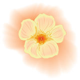Vector gentle pink flower. Watercolour style Royalty Free Stock Photo